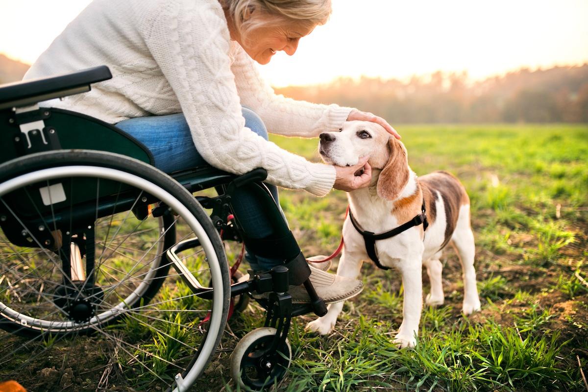 brickmont wheelchair exercises